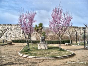 verraco de Ledesma en primavera