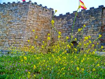 castillo-con-flores