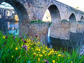 flores-puente