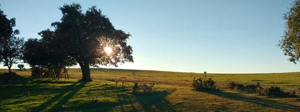 encinas en zona de pasto con sol tras la encina, carrascos de 1 metro de altura a su alrededor.